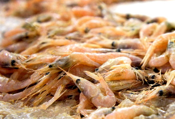 Shrimp on ice.JPG